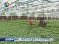 【调整农业结构推进富民增收】(5)响水:高效特色农业助力农民增收致富