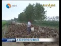 记者走基层:水稻田里的供给侧改革