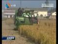 【丰收】(六)规模种植提升土地产出效率
