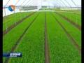 【丰收】 (十一)抢抓秋播有利时机 加快农业结构调整