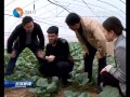 响水成立全省首家西兰花产业研究院