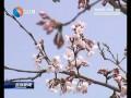 【花开盐城】(3):最美四月天 花开春满园