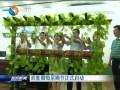 滨淮葡萄采摘节正式启动