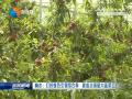 響水:打好綠色引領組合拳  建成全國最大蔬菜工廠