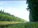 画里盐城•黄海国家森林公园