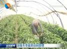 增强冬季蔬菜田间治理