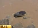 绿龟岸边搁浅 渔民放归大海