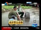 夜捉青蛙撞上警察 警方放蛙处理人