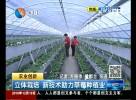 立体栽培新技术助力草莓种植业