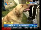 文明养犬 让城市更宜居