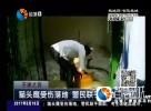 猫头鹰受伤落地 警民联手救助