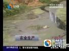 河道淤积水位低  村民夏种用水难