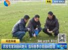 农技专家到田间地头 指导春季小麦田间管理