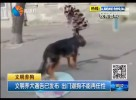 文明养犬通告已发布 出门遛狗不能再任性
