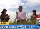 """滩涂变良田 盐碱地头年种稻实现""""超高产"""""""