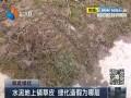水泥地上铺草皮 绿化造假为哪般