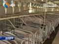 确保非洲猪瘟防控工作取得实效