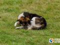 小区多只宠物狗死亡 草坪内发现可疑香肠丁,刑警介入