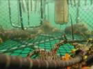 有口福了!新西兰龙虾出口商瞄准中国线上市场