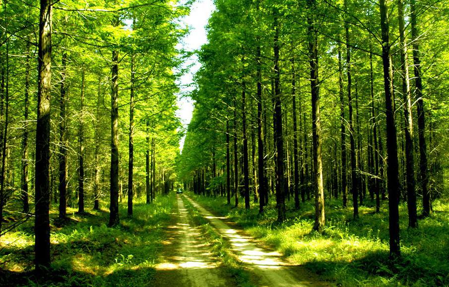 根据三牌同创的目标要求,黄海国家森林公园已成功申报国家森林公园,今年还将致力建成4A级景区和省级旅游度假区。目前,公园森林课堂项目已经建成,通过各个树种的地理坐标和树种的详细介绍,市民可以对树木生长以及树木文化有更为直观的了解,增长科普知识。据了解,生态停车场、游客服务中心、空中栈道、二级驿站、湿地长廊、少儿营地、森林竞技场、木屋群落、生态厕所,以及配套设施景观提升等将于4月底全面竣工。 黄海国家森林公园总面积4.