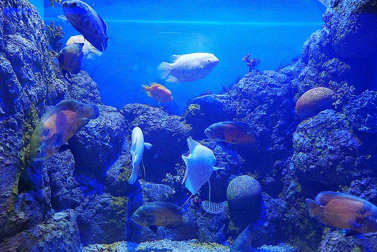 大海龟,黄金鲹……大丰海洋世界水族馆将添新成员