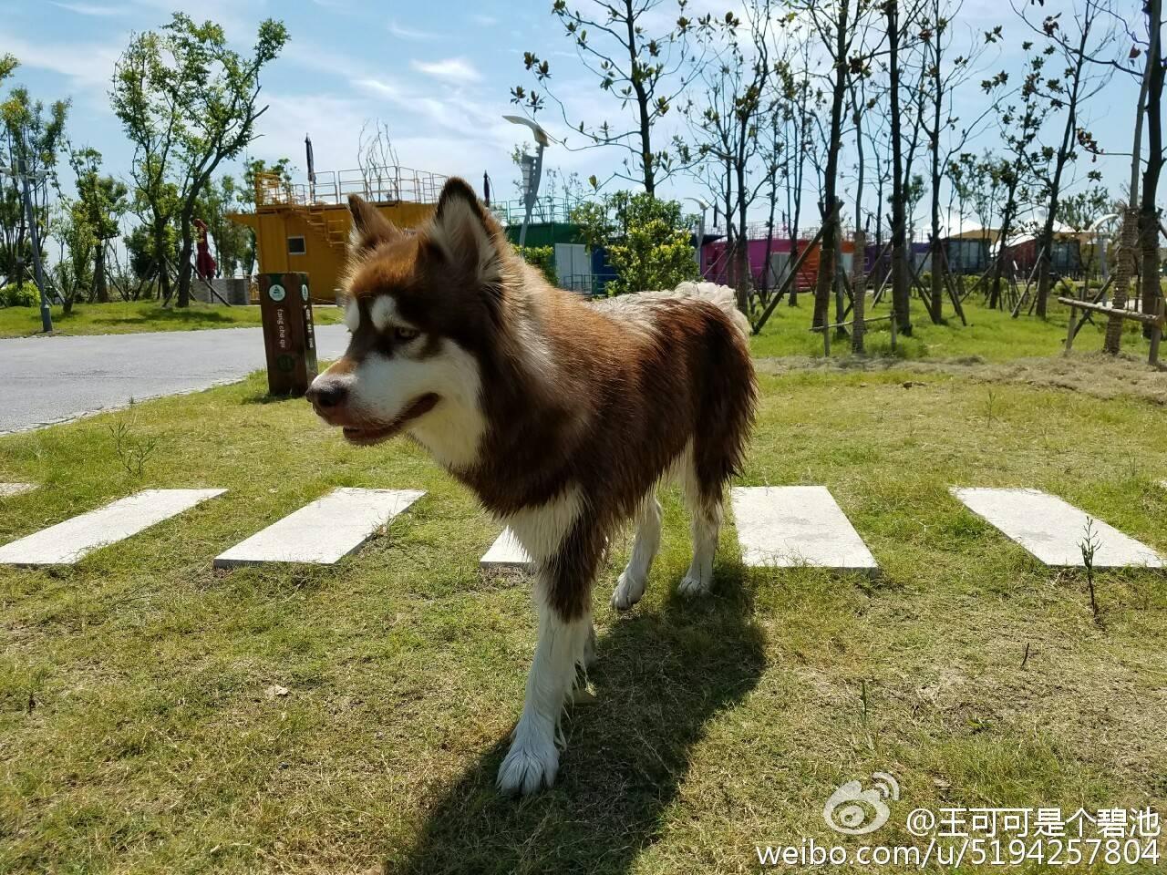 王思聪的狗有个小目标:先到盐城大纵湖玩一圈....
