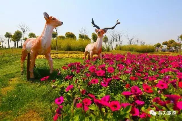 开园啦!今天黄尖牡丹园盛大开园啦!美得不要不要得!