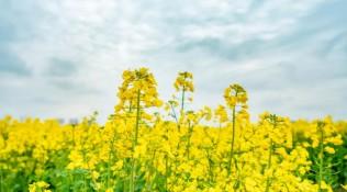 """""""花开盐都,春游水乡"""",即将唱响大纵湖东晋水城,与您相约这个春日最烂漫的精彩"""