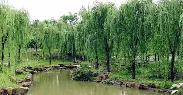 阜宁马荡风景区2017