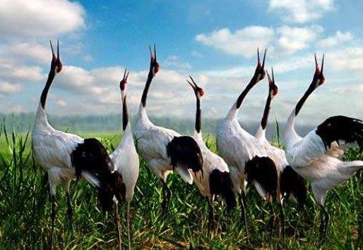 盐城丹顶鹤湿地生态旅游区隶属于盐城国家级珍禽自然保护区管理处