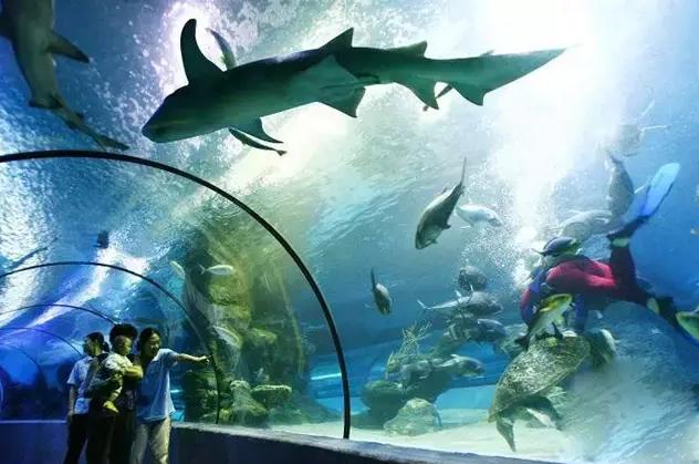 连云港海州湾海洋馆 海洋馆建筑面积1.2万平方米,坐落于连云港海州湾国家海洋公园。大家在逛海洋馆的同时还可以游览该公园它地处亚热带与暖温带的交界处,具有3种海岸类型、6种海蚀地貌、陆生动物4类、鱼类200多种、海岛鸟类100多种。公园以秦山岛为中心划定,南侧和西侧以现有海岸线为界,东侧和北侧界限依据连云港人工鱼礁工程区的东界和北界划定,是一座国家级海洋公园。 夏季已至,大家可以在海洋馆海底隧道内与鲨鱼、海龟、珊瑚等深海物种近距离接触,亲身体验深海世界带来的乐趣。 参考门票价格:100元/人 地址:连云