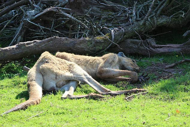 英国一动物园3年养死500只动物被勒令关闭