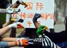 大学生手绘动物迎接国际珍稀动物保护日