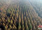 层林尽染 盐城黄海国家森林公园冬景美如画!