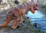 玩命游戏!男子扮成霸王龙戏弄水中鳄鱼