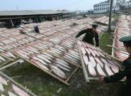 航拍浙江千吨级鱼干晾晒 场面壮观