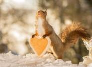 可爱松鼠拍情人节写真 浪漫唯美好甜蜜