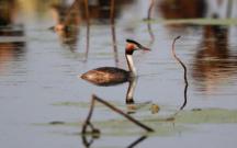 湖北潜江迎来大批候鸟集群越冬