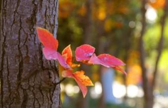 盐渎公园最美秋色已上线!美爆了!