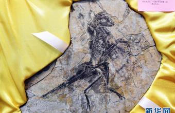 8块流浪欧洲的恐龙和鸟化石万里归乡
