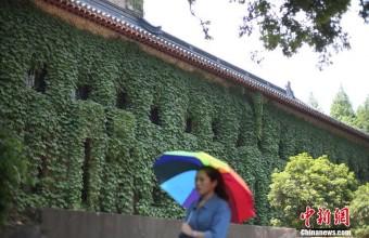 南京高校爬山虎满墙绿意盎然