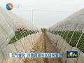 天气变化 注意蔬菜生长田间管理