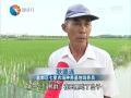 """记者走基层:稻鸭共作新模式  实现种植养殖""""双赢"""""""