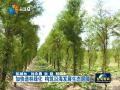 加快造林绿化 构筑沿海发展生态屏障