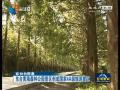 东台黄海森林公园景区创成国家4A级旅游景区