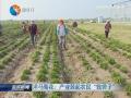"""【富民路上】洋马菊花:产业鼓起农民""""钱袋子"""""""