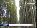 全市已完成新造林14万亩