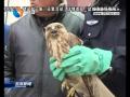 野生动物遇险  警民合作助其放飞