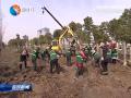 王荣平对春季植树造林工作进行部署:抓住黄金季节全力推进大规模国土绿化行动