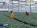 """【时政纵横】:现代农业园区做大做强""""农""""文章"""